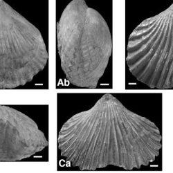 Just out | Two new rhynchonelliform brachiopods from the Albian stratotype region (Paris Basin) – focusing @ Annales de Paléontologie