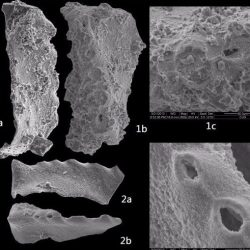Just out | New Permian-Triassic conodont data from Selong (Tibet) and the youngest occurrence of Vjalovognathus @ Journal of Asian Earth Sciences