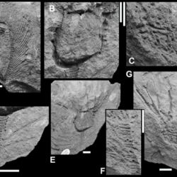 Just out | A Lower Devonian hexacrinitid crinoid (Camerata, Monobathrida) from south-west England @ PalZ