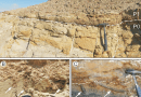 Just out | Sequence Stratigraphy and Paleontology of the Upper Miocene Pisco Formation along the Western Side of the Lower Ica Valley (Ica Desert, Peru) @ Rivista Italiana di Paleontologia i Stratigrafia