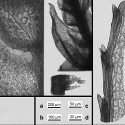Just out | A multiproxy macrofossil record of Eemian palaeoenvironments from Klaksvík, the Faroe Islands @ Boreas