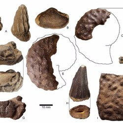 Just out | The first reported ceratopsid dinosaur from eastern North America (Owl Creek Formation, Upper Cretaceous, Mississippi, USA) @ PeerJ
