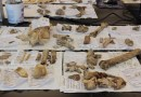 On the News   USA   Natural Trap Cave Fossils To Be Archived At The University Of Wyoming @ Wyoming Public Media Statewide Network