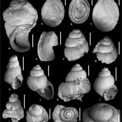 Just out | Early Miocene gastropod and ectothermic vertebrate remains from the Lesvos Petrified Forest (Greece) @ PalZ