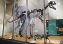 On the News | UK | Dinosaurs' sensitive snouts enabled courtship 'face stroking', study suggests @ The Guardian