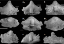 Just out | A new euselachian shark from the early Permian of the Middle Urals, Russia @ Acta Palaeontologica Polonica