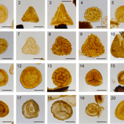 Just out | Late Triassic (early Carnian) palynology of shallow stratigraphical core 7830/5-U-1, offshore Kong Karls Land, Norwegian Arctic @ Palynology