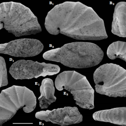 Just out | Terreneuvian stratigraphy and faunas from the Anabar Uplift, Siberia @ Acta Palaeontologica Polonica