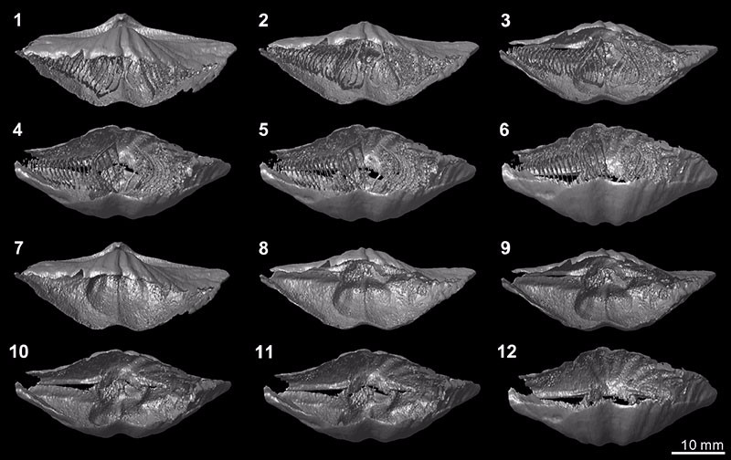 Just out | Virtual palaeontology: the effects of mineral composition and texture of fossil shell and hosting rock on the quality of X-ray microtomography (XMT) outcomes using Palaeozoic brachiopods @ Palaeontologia Electronica
