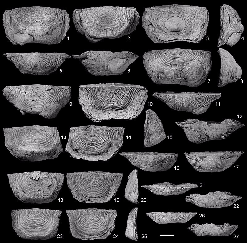 Just out | New insights on Tournaisian–Visean (Carboniferous, Mississippian) athyridide, orthotetide, rhynchonellide, and strophomenide brachiopods from southern Belgium @ Palaeontologia Electronica
