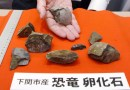 On the News | Japan | 52-year-old discovery in Yamaguchi Prefecture confirmed as dinosaur egg fossil @ The Japan Times