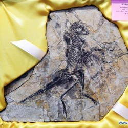 On the News | China | Fossils returned to China @ Xinhuanet