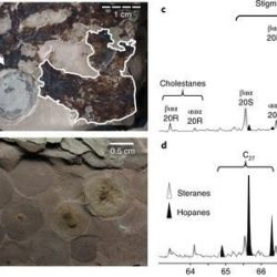 Just out | Molecular fossils from organically preserved Ediacara biota reveal cyanobacterial origin forBeltanelliformis @ Nature Ecology and Evolution