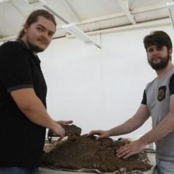 On the News | Brazil | Paleontólogos da UFSM coletam fóssil da carapaça de um tatu gigante pré-histórico @ UFSM