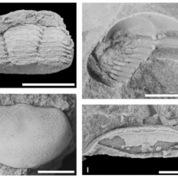 Just out | New Bulletin of Geosciences Issue with 7 New Paleontological Papers