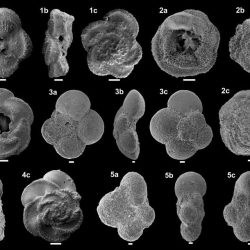 Just out | Late Cretaceous (Cenomanian-Maastrichtian) planktic foraminifera from Goban Spur (DSDP sites 549 and 550): Biostratigraphic inferences @Cretaceous Research