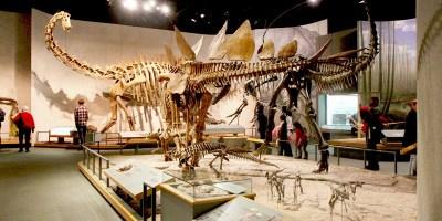 Job | Denver Museum of Nature & Science | Paleontology Preparator – 3 month term