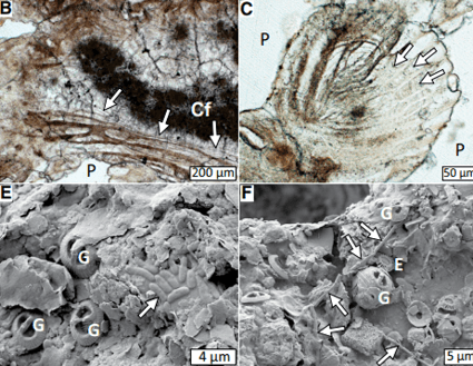 Just out | Stromatolites below the photic zone in the northern Arabian Sea formed by calcifying chemotrophic microbial mats @Geology
