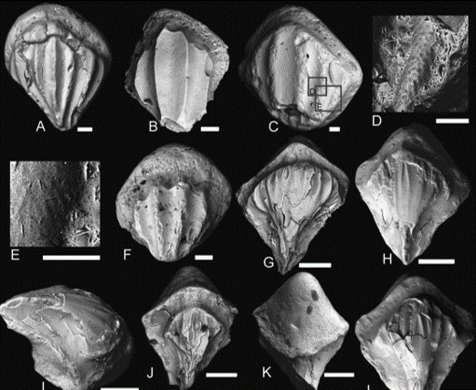 Just out | The Middle Devonian acanthodian assemblage of the Karksi outcrop in Estonia @ Estonian Journal of Earth Sciences