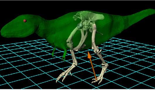 On the News | Australia | Bolting birds help reveal dinosaur gait @ The University of Queensland News