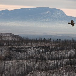 On the News | USA | Tree rings reveal increased fire risk for southwestern US @ Nature News