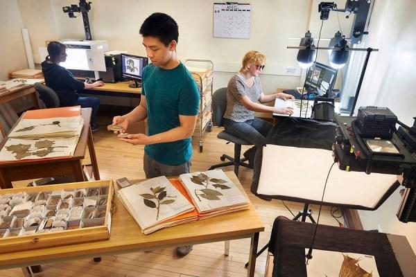 Internship | The Field Museum | Mollusk Collection Digitization