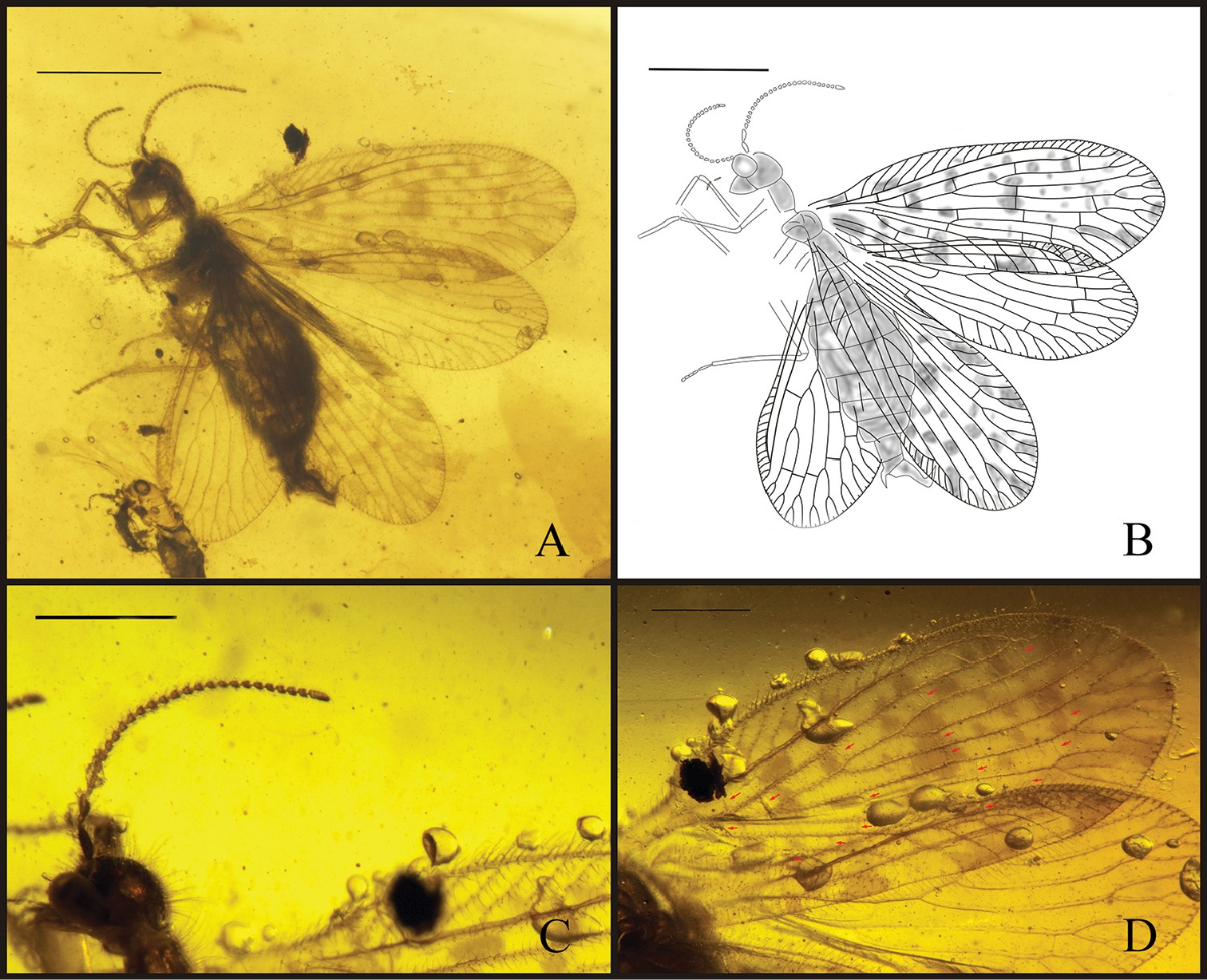 Just out | New genus and species of sisyrids (Insecta,Neuroptera) from the Late Cretaceous Myanmar amber @ ZooKeys