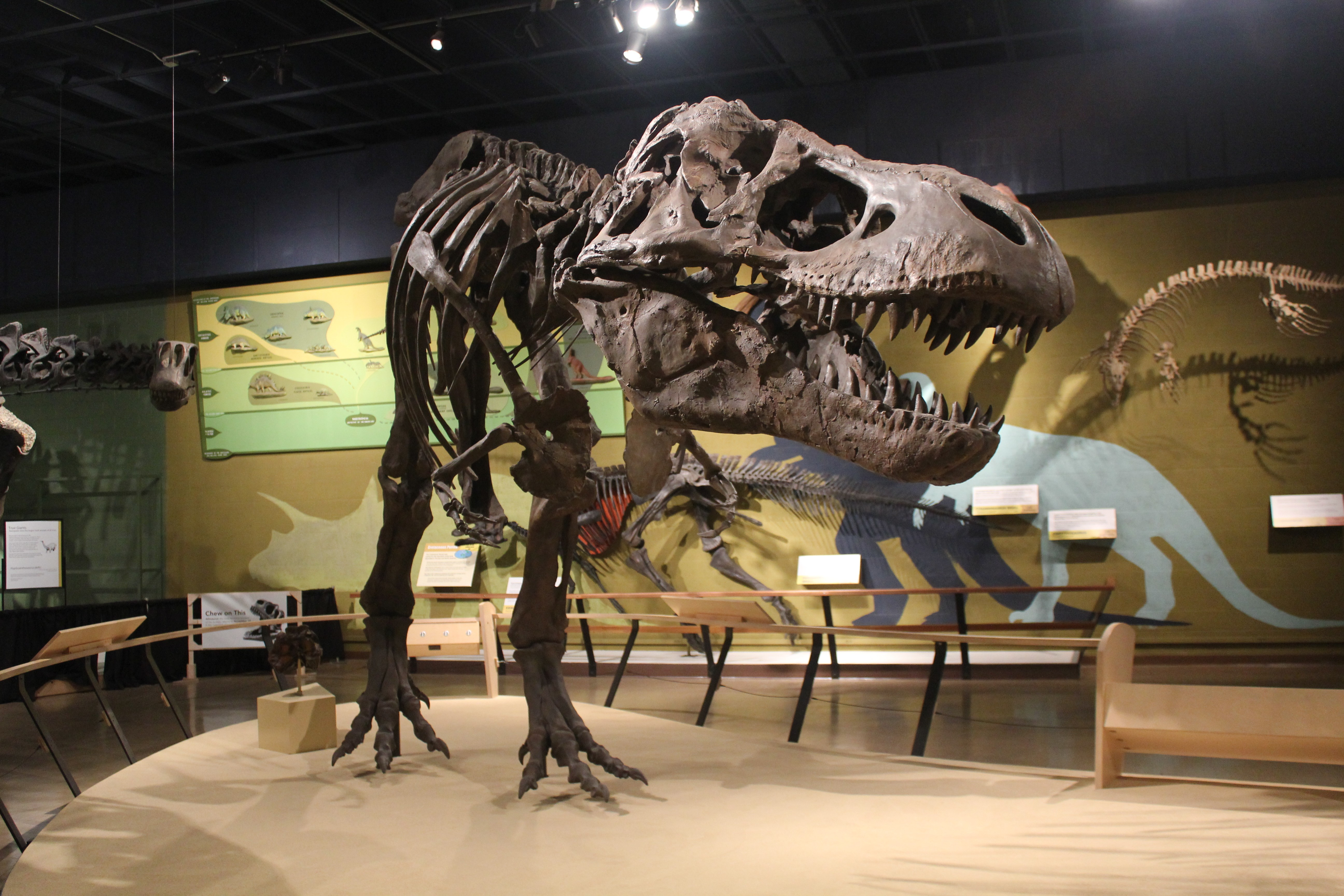 Job Cleveland Museum Of Natural History Museum Educator Paleowire