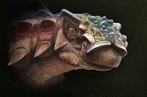 On the News | USA | Newly discovered dinosaur was covered in spiky armor @ New York Post