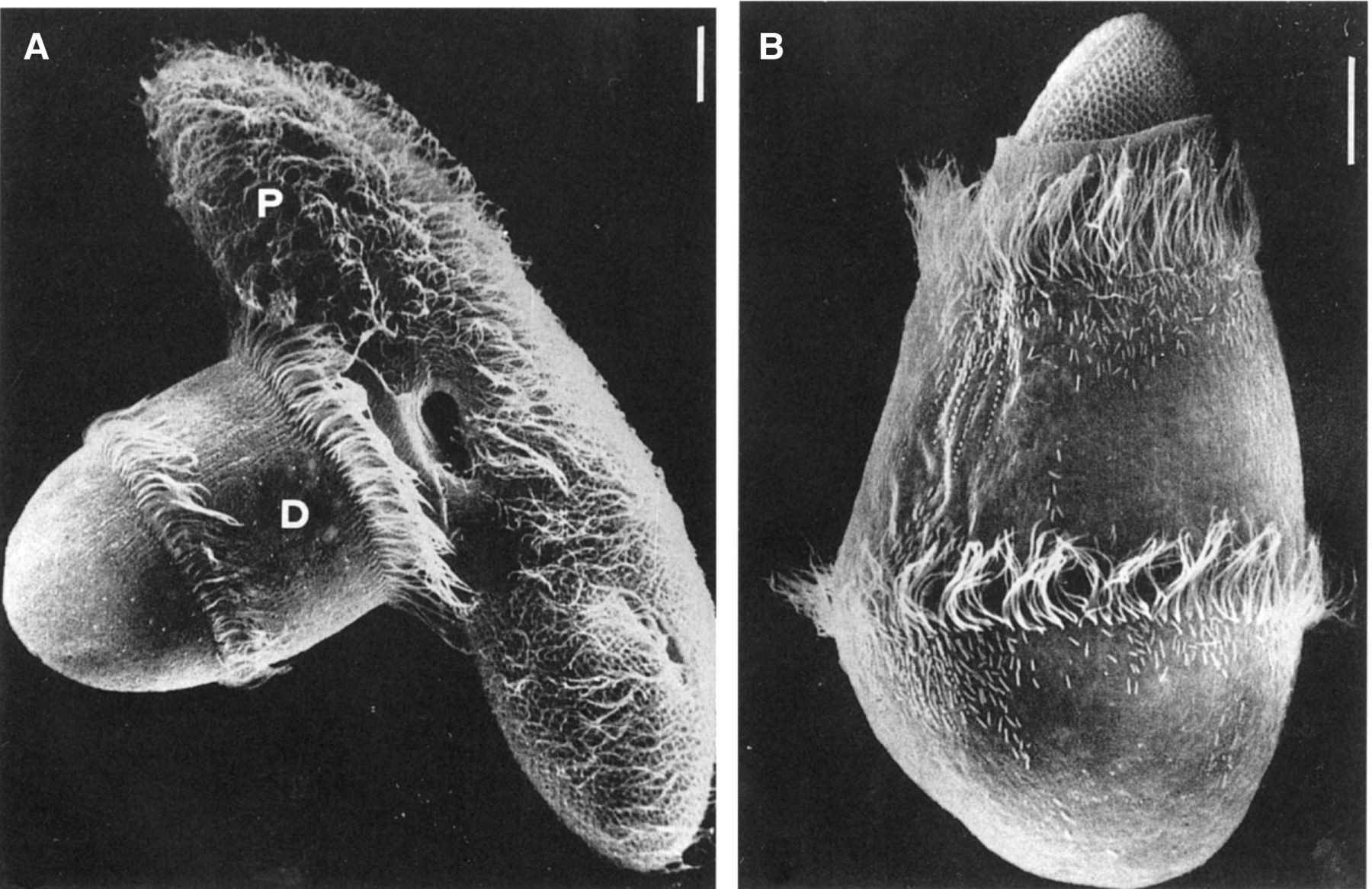 Just out | It's a protist-eat-protist world: recalcitrance, predation, and evolution in the Tonian–Cryogenian ocean @Emerging Topics in Life Sciences