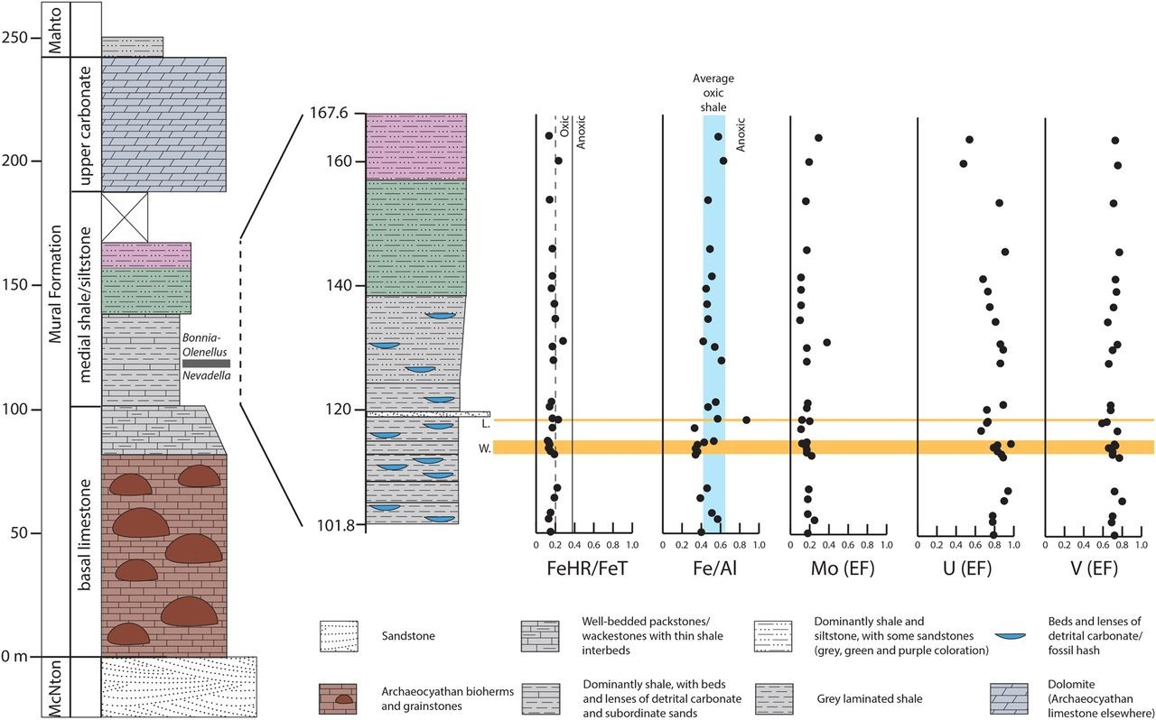 Just out |  On the edge of exceptional preservation: insights into the role of redox state in Burgess Shale-type taphonomic windows from the Mural Formation, Alberta, Canada @Emerging Topics in Life Sciences