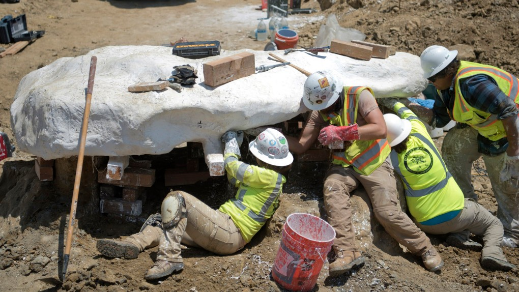 On the News | USA | Whale fossil discovered at San Juan Capistrano landfill may be clue to new species that existed here some 7 million years ago @ The Orange County Register
