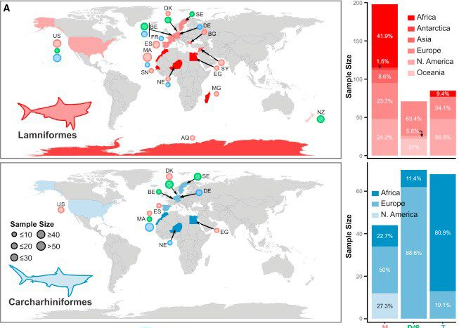 Just out | Static Dental Disparity and Morphological Turnover in Sharks across the End-Cretaceous Mass Extinction @ Current Biology