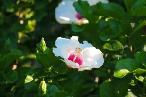 jardin-japones-128