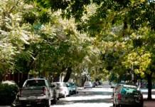 Se confirmó la medida autelar que suspende poda y/o tala ilegal del arbolado público