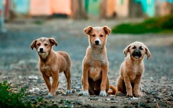 Atención gratuita para mascotas sábado 16 y domingo 17/12
