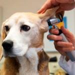 Atención veterinaria gratuita 17, 18 y 23 de febrero