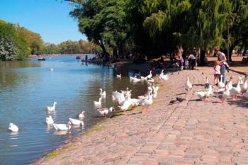 Gansos en el Lago Regatas