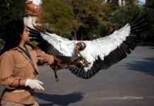 Celebrá el Día de la Vida Silvestre en Ecoparque y Jardín Botánico