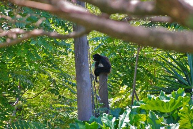 Ecoparque - Mono Araña
