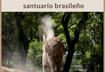 Mara viajará a Brasil