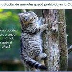 La mutilación de animales quedó prohibida en la Ciudad
