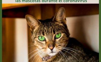 Recomendaciones sobre el cuidado de las mascotas durante el coronavirus.
