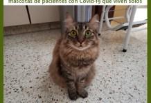 Se convoca a voluntarios para cuidar mascotas de pacientes con Covid-19 que viven solos