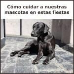 cuidar a nuestras mascotas