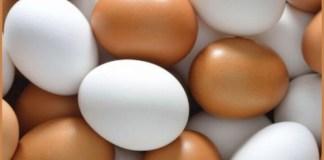 Proyecto de ley sobre etiquetado de huevos producidos en Argentina
