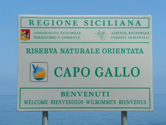 capogallo1_09