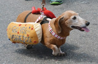 Dogs of all sizes join owners in the Fourth of July parade.  Photo: Shelby Pascoe