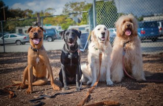 Palisades dog owners are seeking a dog park for these pets. Photo: Grove Pashley