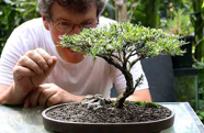 Melvin Widawski will hold a bonsai demonstration at the Feb. 5 Pacific Palisades Garden Club meeting.